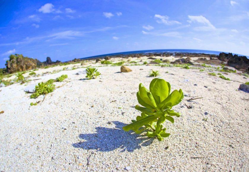 宝島の砂浜と植物