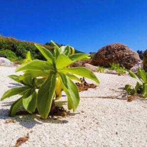 宝島の砂浜の草たち