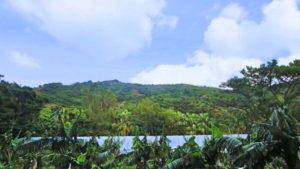 宝島のバナナ畑