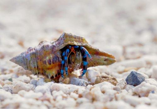 珊瑚の砂浜のヤドカリ
