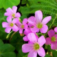 宝島の咲く可憐な花